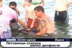 Летовници спасиха малко делфинче
