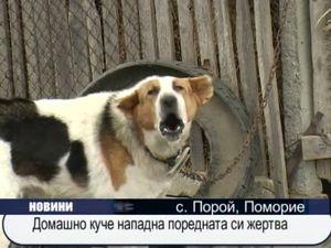 Домашно куче нападна поредната си жертва