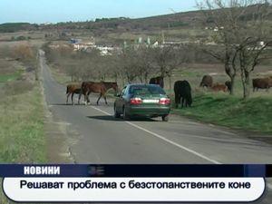 Решават проблема с безстопанствените коне