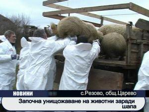 Започна унищожаване на животни заради шапа