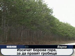 Изсичат борова гора, за да правят гробище