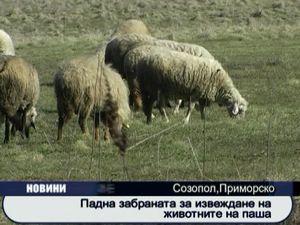 Падна забраната за извеждане на животните на паша