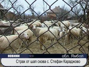 Страх от шап скова с. Стефан Караджово
