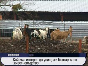 Кой има интерес да унищожи българското животновъдство