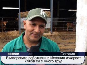 Българските работници в Испания изкарват хляба си с много труд