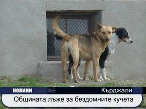 Общината лъже за бездомните кучета