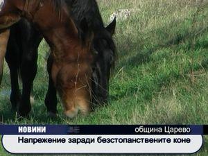 Напрежение заради безстопанствени коне