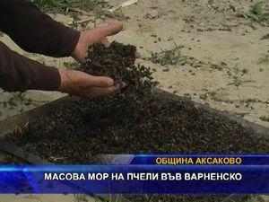 Масово измиране на пчели във варненско