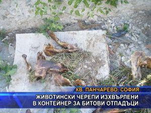 Животински черепи изхвърлени в контейнери за битови отпадъци