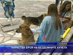 Нараства броя на бездомните кучета
