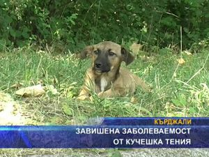 Завишена заболеваемост от кучешка теня