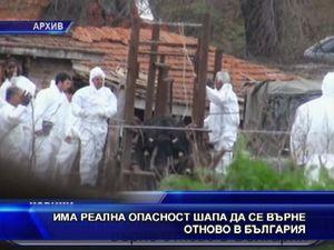 Има реална опасност шапа да се върне в България