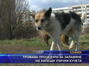 Тромава процедура за залавяне на хапещи улични кучета