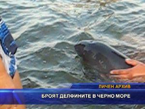 Броят делфините в Черно море