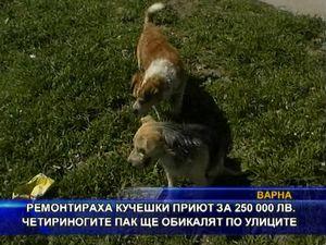 Ремонт на кучешки приют за 250 000 лв, псета пак по улиците