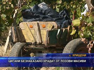 Цигани безнаказано крадат от лозови масиви