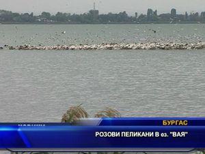 Розови пеликани в езерото Вая