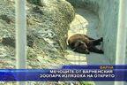 Мечоците от Варненския зоопарк излязоха на открито