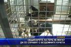 Общинари на ГЕРБ не могат да се справят с бездомните кучета