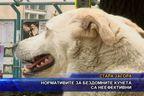 Нормативите за бездомните кучета са неефективни