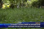 Очакват нашествие от вредители заради необработени зелени площи