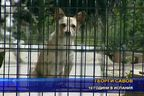 В Испания няма улични кучета