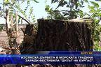 """Изсякоха дърветата в Морската градина заради фестивала """"Духът на Бургас"""""""