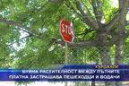 Буйна растителност застрашава пешеходци и водачи