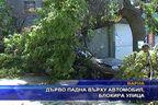 Дърво падна върху автомобил и блокира улица