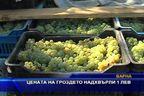 Цената на гроздето надхвърли 1 лев