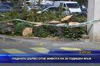 Паднало дърво уби 26-годишен мъж