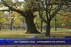 200 годишен дъб - атракцията на селото