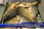 Опашки за шарани се извиха в рибната борса