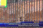 Царица Косара - новото попълнение във Варненския зоопарк