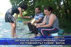 Цигани незаконно продават гъби на главния път София - Варна