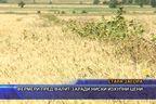 Фермери пред фалит заради ниски изкупни цени