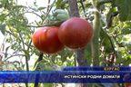 Истински родни домати