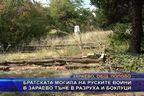 Братската могила на руските воини в Зараево тъне в разруха и боклуци