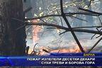 Пожар изпепели десетки декари сухи треви и борова гора