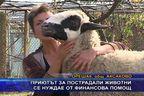 Приютът за пострадали животни се нуждае от финансова помощ