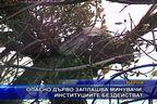 Опасно дърво заплашва минувачи, институциите бездействат