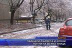 Паднали дървета и клони почти на всяка улица