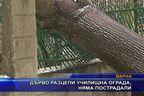 Дърво разцепи училищна ограда, няма пострадали
