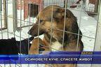 Осиновете куче, спасете живот