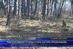 Обезлесяването край Стара Загора продължава