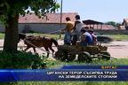 Цигански терор съсипва труда на земеделските стопани