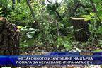 Незаконното изкупуване на дърва води до незаконна сеч