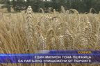 Един милион тона пшеница са напълно унищожени от пороите