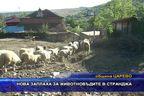 Нова заплаха за животновъдите в Странджа