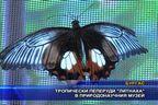 """Тропически пеперуди """"литнаха"""" в природонаучния музей"""